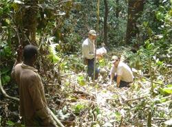 Западная Африка, 2007 год